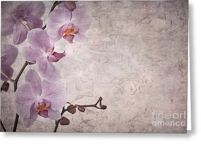 Grungy Greeting Cards - Vintage orchids Greeting Card by Jane Rix