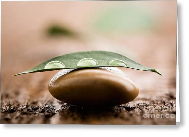 Wellbeing Greeting Cards - Water drops on leaf Greeting Card by Kati Molin