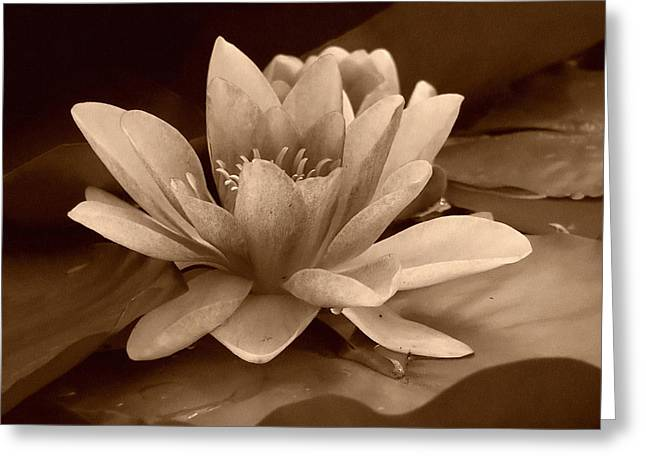Water Lilly Greeting Cards - Water Lily Greeting Card by Design Windmill
