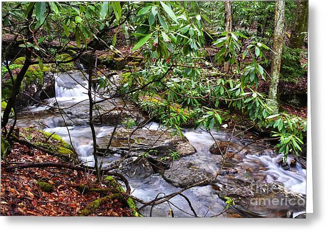 Rushing Stream Greeting Cards - White Oak Run in Spring Greeting Card by Thomas R Fletcher