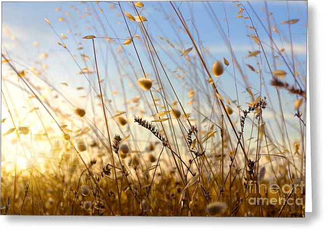 Warm Summer Greeting Cards - Wild Spikes Greeting Card by Carlos Caetano