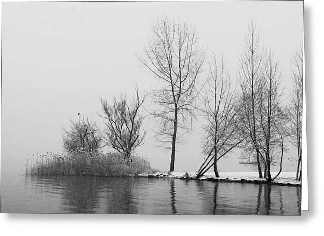 Winter Travel Photographs Greeting Cards - Wintertrees Greeting Card by Joana Kruse
