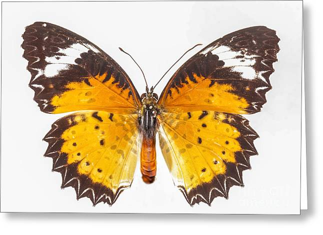 Creature Design Greeting Cards - Yellow butterfly Greeting Card by Anek Suwannaphoom