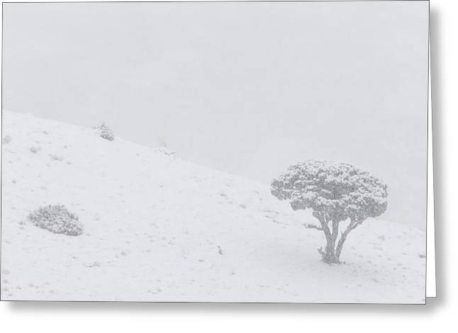 Yellowstone Park Wyoming Winter Snow Greeting Card by Mark Duffy