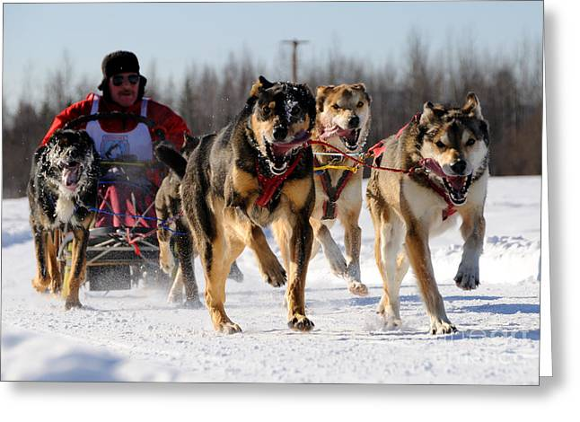 Dog Sled Greeting Cards - 2011 Limited North American Sled Dog Race Greeting Card by Gary Whitton