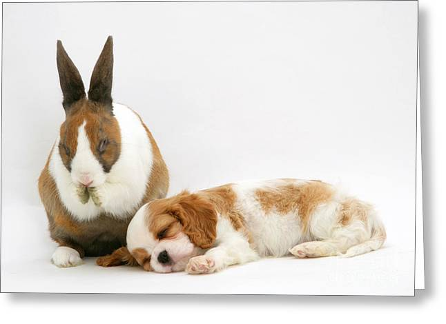 Sleeping Puppies Greeting Cards - Rabbit And Puppy Greeting Card by Jane Burton