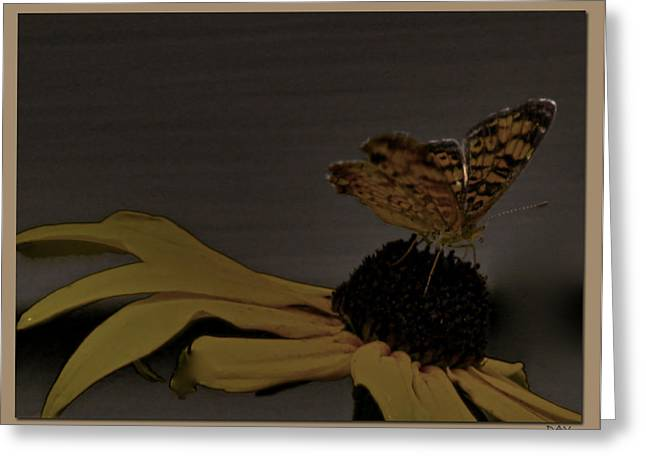 Butterfly Collection Greeting Card by Debra     Vatalaro