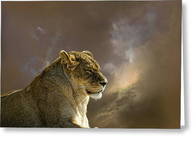 Lioness Greeting Cards - 2359 Greeting Card by Peter Holme III