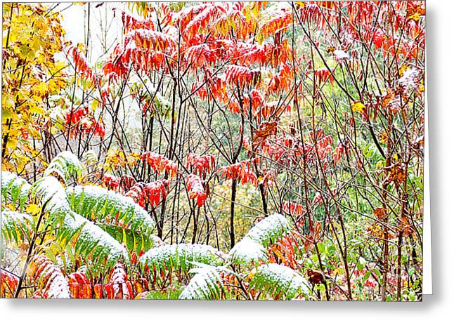 Glabra Greeting Cards - Autumn Snow Monongahela National Forest Greeting Card by Thomas R Fletcher
