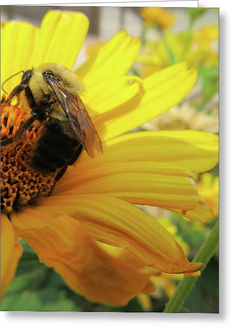 Photography Reliefs Greeting Cards - Bee Greeting Card by Michele Caporaso