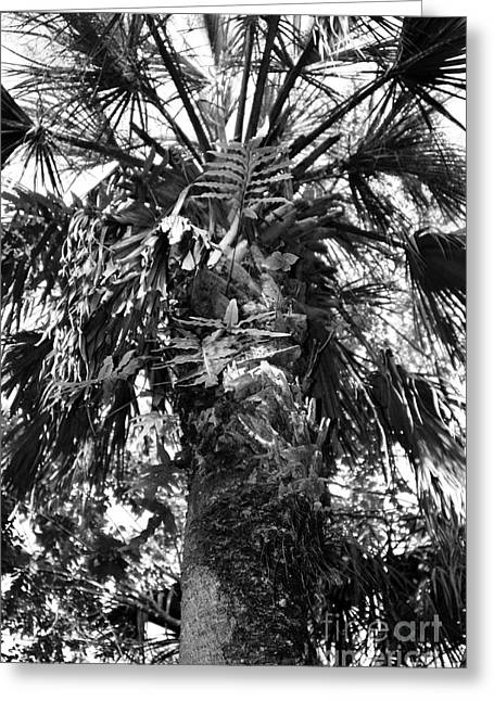 Palm Greeting Cards - Centurions of the Forest Series Greeting Card by Terry Troupe