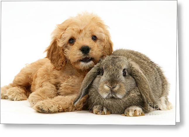 Dog Photographs Greeting Cards - Puppy And Rabbit Greeting Card by Mark Taylor
