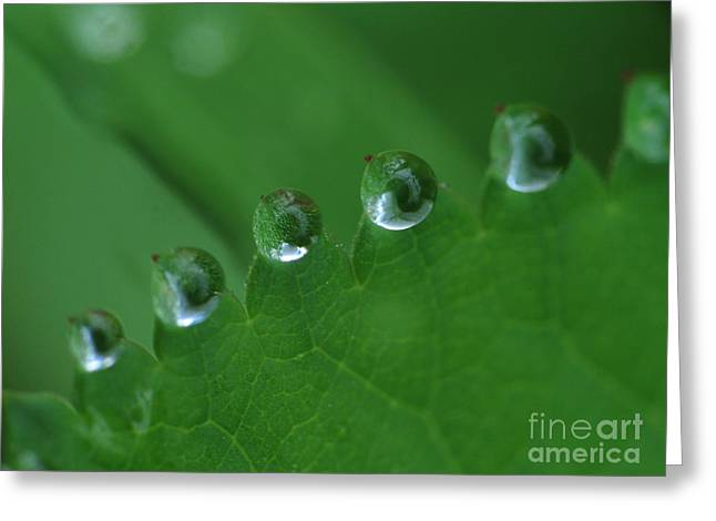 Drops Greeting Card by Odon Czintos