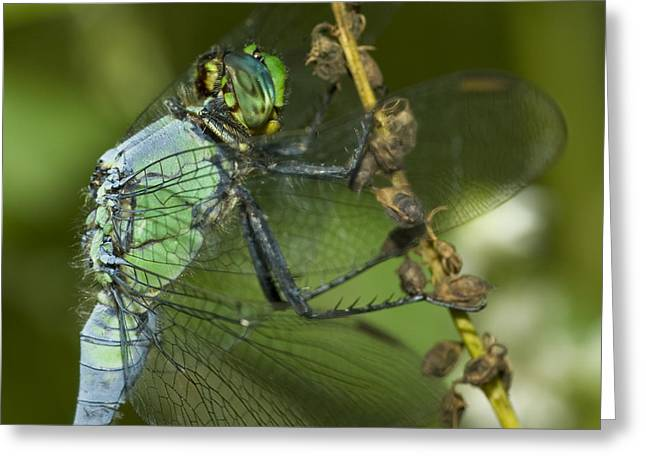 Dragon Fly Photo Greeting Cards - Macro Greeting Card by Jack Zulli