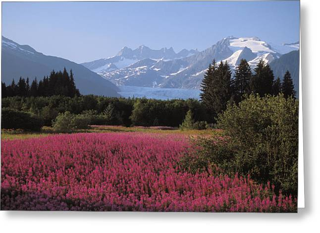 Altitude Greeting Cards - Alaska, Juneau Greeting Card by John Hyde - Printscapes