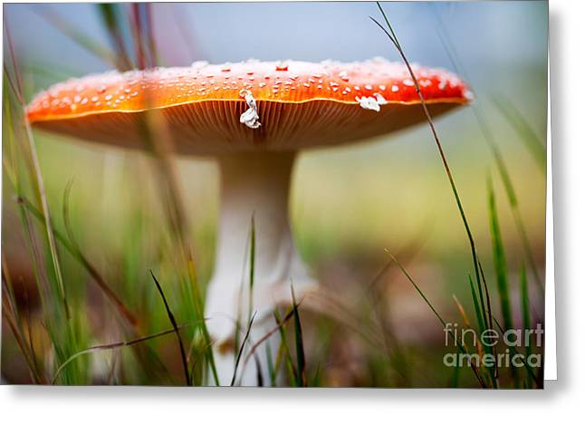 Toadstools Greeting Cards - Amanita Greeting Card by Kati Molin