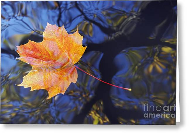 Autumn Leaf On The Water Greeting Card by Michal Boubin
