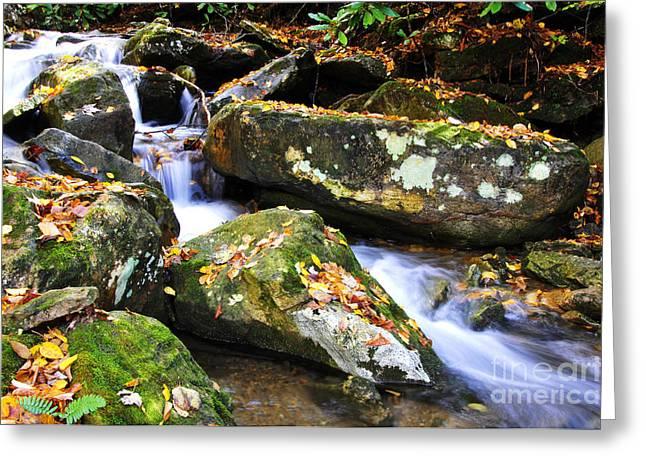 Autumn Mountain Stream Greeting Card by Thomas R Fletcher