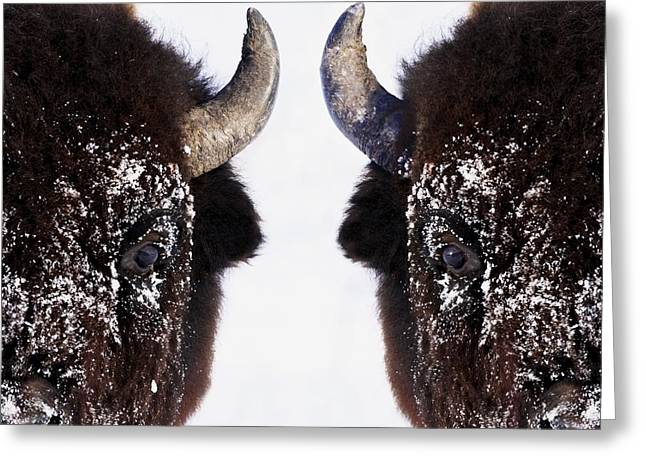 Close Up Buffalo Greeting Cards - Bison In Winter Greeting Card by Richard Wear