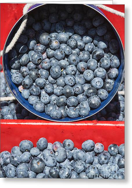 Farm Bucket Greeting Cards - Blueberry Harvest Greeting Card by John Greim