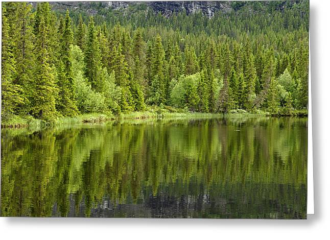 Calm lake reflection Greeting Card by Conny Sjostrom