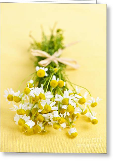 Chamomile Greeting Cards - Chamomile flowers Greeting Card by Elena Elisseeva