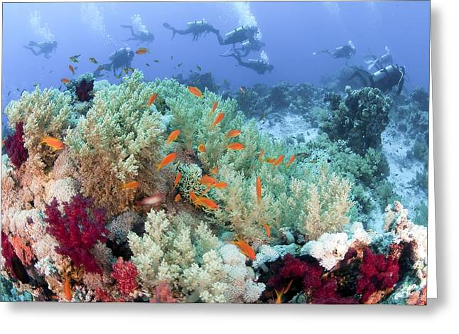 Aquatic Greeting Cards - Coral Reef Red Sea, Ras Mohammed Greeting Card by Photostock-israel