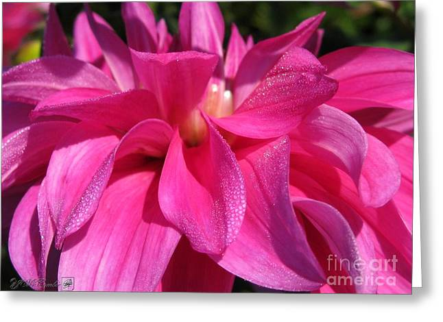 Hottie Greeting Cards - Dahlia named Im A Hottie Greeting Card by J McCombie