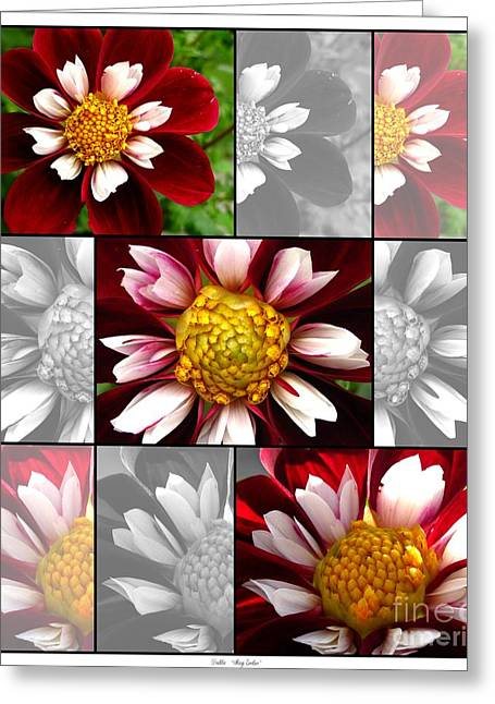 Red Wine Prints Greeting Cards - Dahlia named Mary Eveline Greeting Card by J McCombie