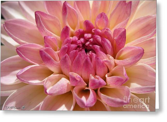 Stellar Prints Greeting Cards - Dahlia named Valley Porcupine Greeting Card by J McCombie