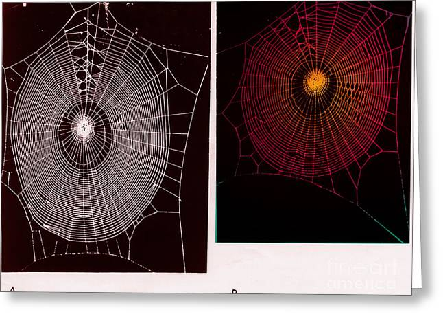 Arachnids Greeting Cards - Effect Of Psilocybin Greeting Card by Omikron