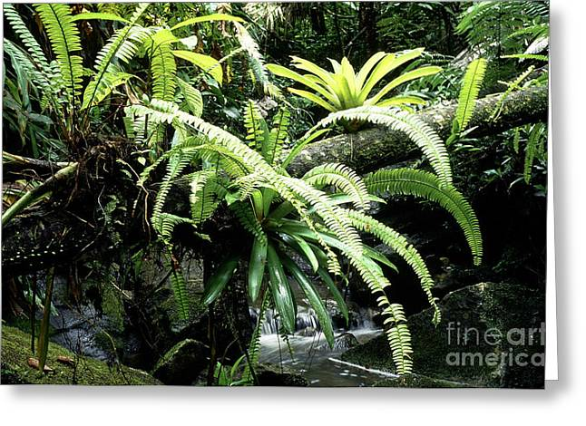 Puerto Rico Greeting Cards - El Yunque National Forest Greeting Card by Thomas R Fletcher