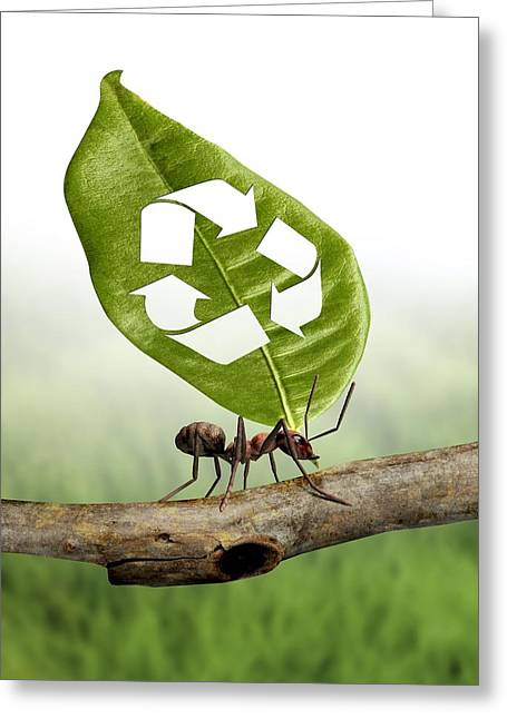 Responsible Greeting Cards - Environmental Care, Conceptual Image Greeting Card by Victor Habbick Visions