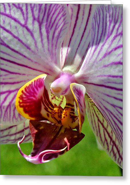 Botany Greeting Cards - Exotic Orchids of C Ribet Greeting Card by C Ribet