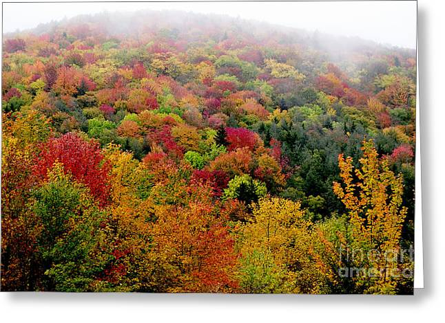 Mountain Road Greeting Cards - Fall color along the Highland Scenic Highway Greeting Card by Thomas R Fletcher