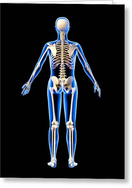 Biomechanical Greeting Cards - Female Skeleton, Artwork Greeting Card by Roger Harris