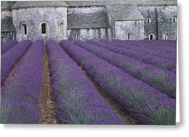 Antiseptic Greeting Cards - Field Of Lavender Greeting Card by David Nunuk