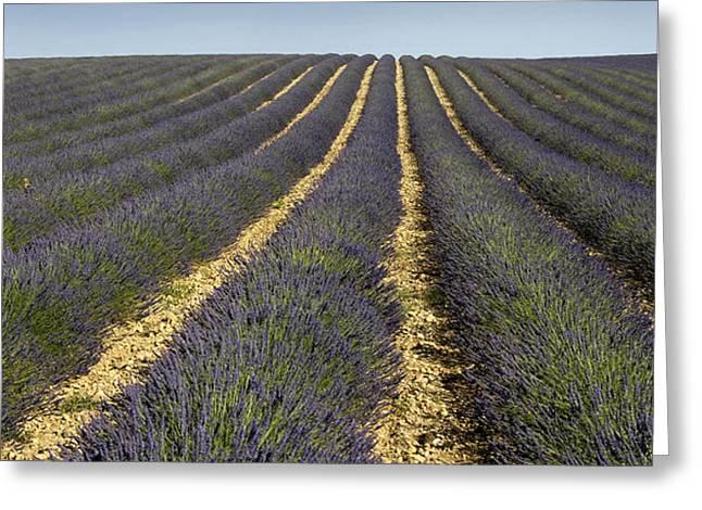 Field of lavender. Provence Greeting Card by BERNARD JAUBERT