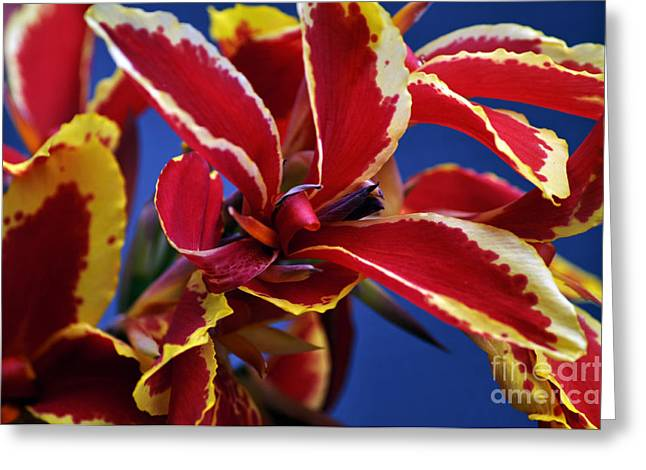 Bruster Greeting Cards - Floral Greeting Card by Clayton Bruster