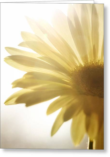 Blume Greeting Cards - Flower Greeting Card by Falko Follert