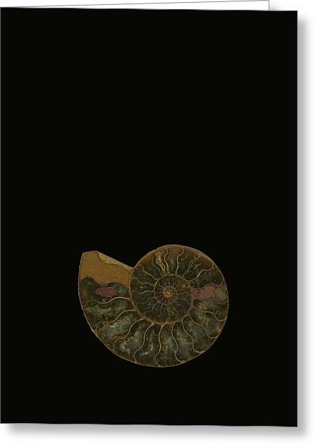 Fossilized Shell Greeting Cards - Fossilized Sea And Marine Shells Or Greeting Card by Deddeda