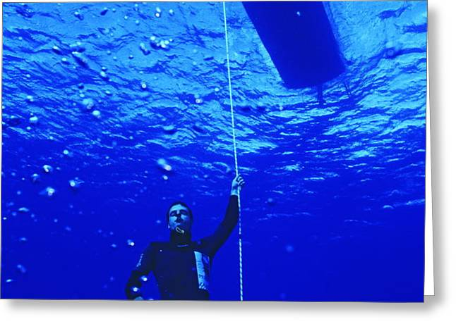 Free-diver Greeting Card by Alexis Rosenfeld