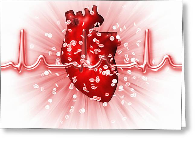 Erythrocytes Greeting Cards - Heart And Ecg Greeting Card by Mehau Kulyk
