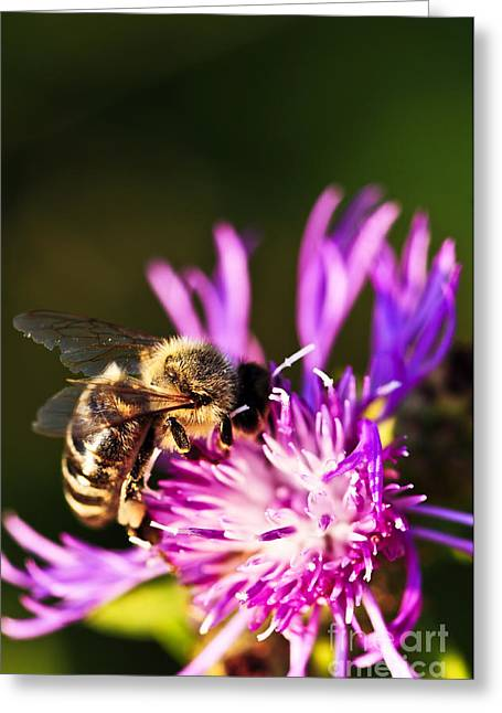 Nectar Greeting Cards - Honey bee Greeting Card by Elena Elisseeva