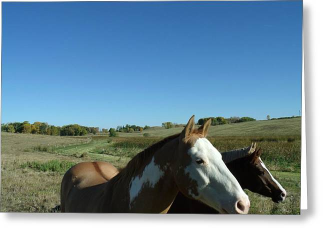 Athletic Love Greeting Cards - 3 Horses in Heaven Greeting Card by Brian  Maloney