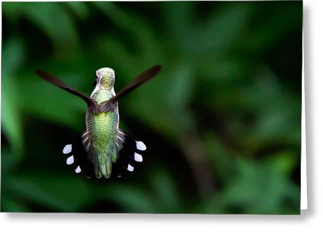 Jason Smith Greeting Cards - Hummingbird Greeting Card by Jason Smith