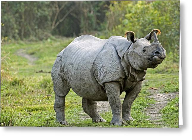 Recently Sold -  - One Horned Rhino Greeting Cards - Indian Rhinoceros Greeting Card by Tony Camacho