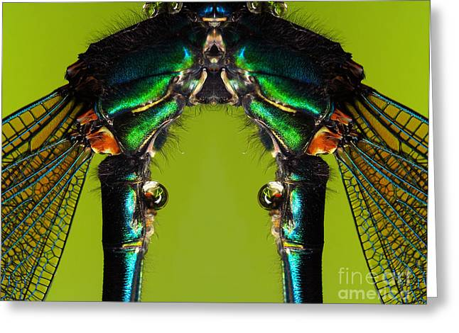 Sweating Photographs Greeting Cards - Insect Greeting Card by Odon Czintos