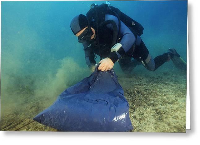 Alga Greeting Cards - Invasive Seaweed Control Greeting Card by Alexis Rosenfeld
