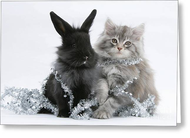 Domesticated Pet Greeting Cards - Kitten And Rabbit Getting Into Tinsel Greeting Card by Mark Taylor